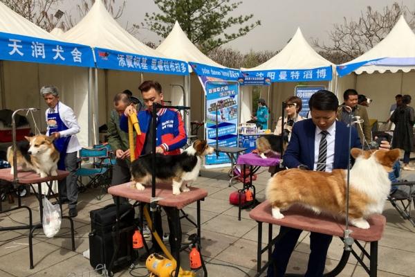 dog-groomingFE5D4310-B522-AE46-AF33-926E7B78512A.jpg