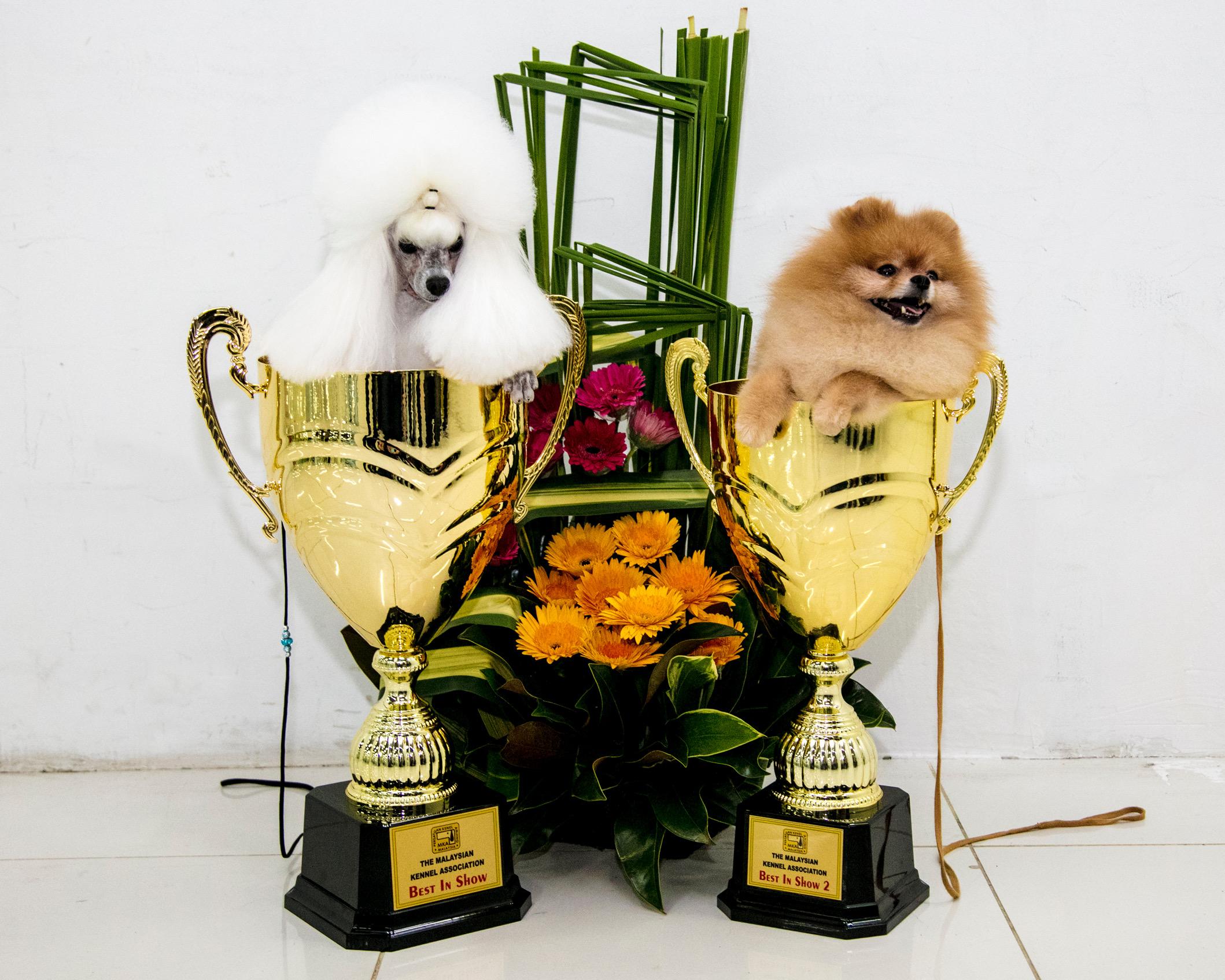 Malaysian Kennel Association 2017