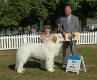 Best in Show at National Working & Pastoral Breeds was the Pyrenean Mountain Dog, Ch Viskalys My Way Or No Way To Chandlimore (Imp) owned by Nagrecha, Mattisson-Sandstrom & Sandstrom, pictured with best in show judge Geoff Corish. Handled by Andi Horwood.