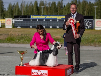 Best in Show at Kuopio Two Day International Show was the American Cocker Spaniel, Int Ch Very Vigie Let It Be, jointly owned by Sanna Vartiainen and Pirjo Huovila and Vibeke Paulsen. BIS Judge was Hans Almgren from Sweden.