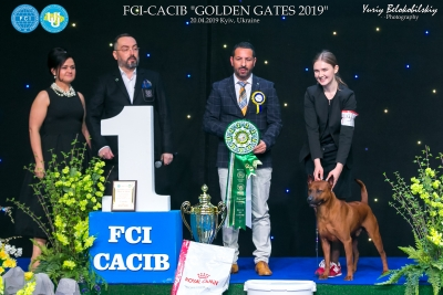 BEST IN SHOW was judged by PANOS DEMETRIOU (Cyprus) who gave first place to the Thai Ridgeback dog