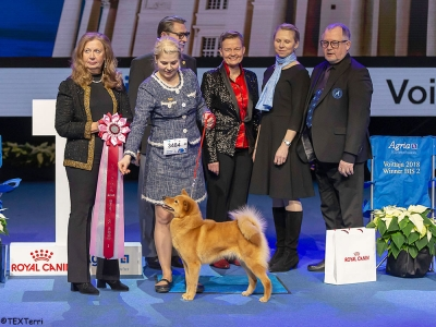 On Sunday, the Best in Show Judge was Leni Finne (Finland) and she chose the Finnish Spitz, Ch Loukkaharjun Aito Lempi, owned by Päivi Silomäki and Toivo and Anni Lielahti and bred Paivi's father.