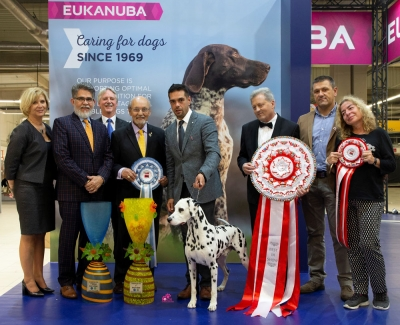The Best in show at last weekend's European Dog Show held in Warsaw, Poland was the Dalmatian, Multi Ch Dalmino Voodoo Vision (age nine years), owned and bred by Zeljka Halper from Croatia and handled by Atilla Schlosser.  The judge was Andrzej Kaźmierski, the President of the Polish Kennel Club.