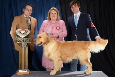 The winner of Best in Show in Luxembourg was the Golden Retriever, Maybe Forever The One And Only, owned by Gnacio Ramirez Gutierrez from Spain. BIS judge was Mrs Melchior (Luxembourg).