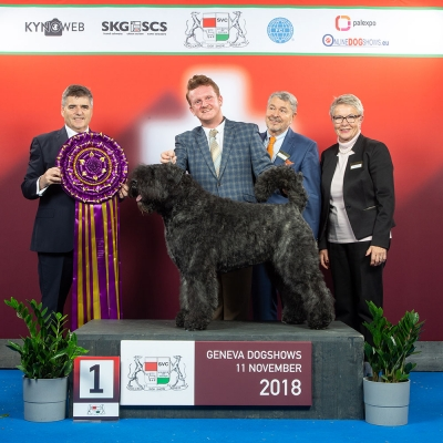 Supreme success for the UK bred Bouvier des Flandres, Avice Airborne With Bouvpilot, owned and bred by Fiona Lambert taking SUPREME BEST IN SHOW judged by Adrian Landarte (Uruguay). Handled by Michael Craig, pictured here with the judge and organisers Laurent Pichard & Barbara Muller.