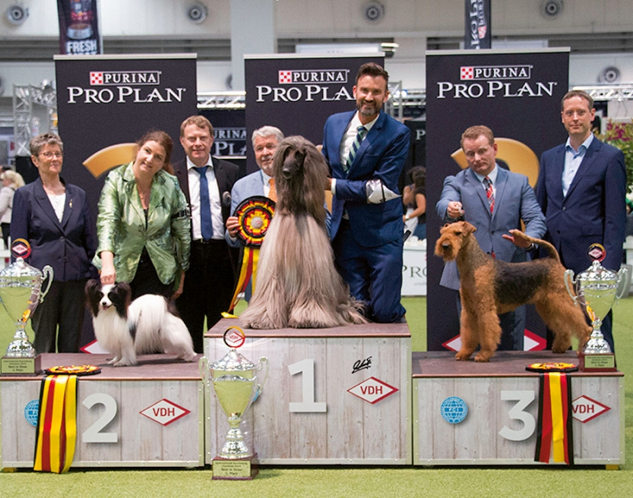 Hannover CACIB: BIS Afghan, Agha Djari's Lonesome Cowboy owned by Thomas & Boieck, BIS 2 Papillon, Griffin JP Manny Pacquiao owned by Weber & Usui, BIS 3 Airedale Terrier, Midsummer Dream Of Malton owned by Bouma & Steinbach/Aalbrecht.