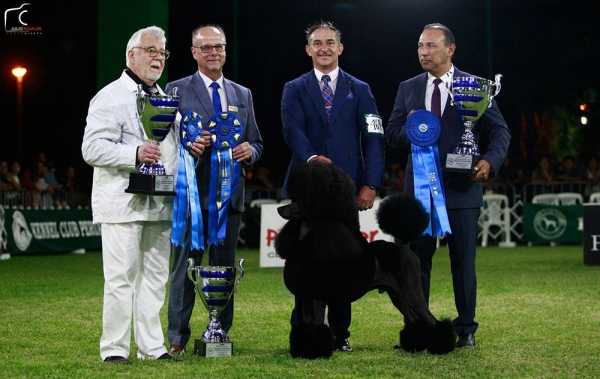 L-R Judge Eugene Yerusalimsky, Judge Richard Paquette, Handler  Konstandinos Pavlopoulos and Judge Roberto Caputi with Standard Poodle 'Ricki' Ch Amberglow Maverick Sabre owned by Ilaria Biondi de Ciabatti from Peru.