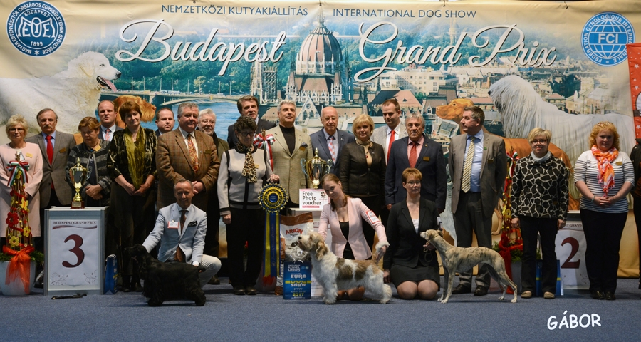 Best in Show on Saturday was the PBGV, Black Majesty Hall Of Fame, owned by Elizaveta Balova and Tatjana Zadarenko from Russia.BIS judge was Zafra Sirik (Israel).
