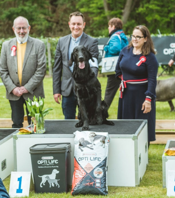 The ultimate Best in Show was the Flat Coated Retriever from Belgium, Diamond In The Sky Black Brianta, owned by Dimitri Sevit.