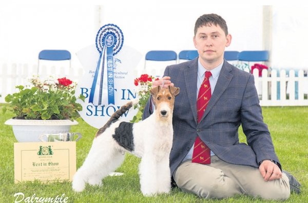 Best in show (for the second week running) at Border Union last weekend was the Wire Fox Terrier Ch Travella Laketrix Set To Strike, owned by Victor Malzoni and Sue Browne-Cole,  pictured relaxing with his handler Warren Bradley.
