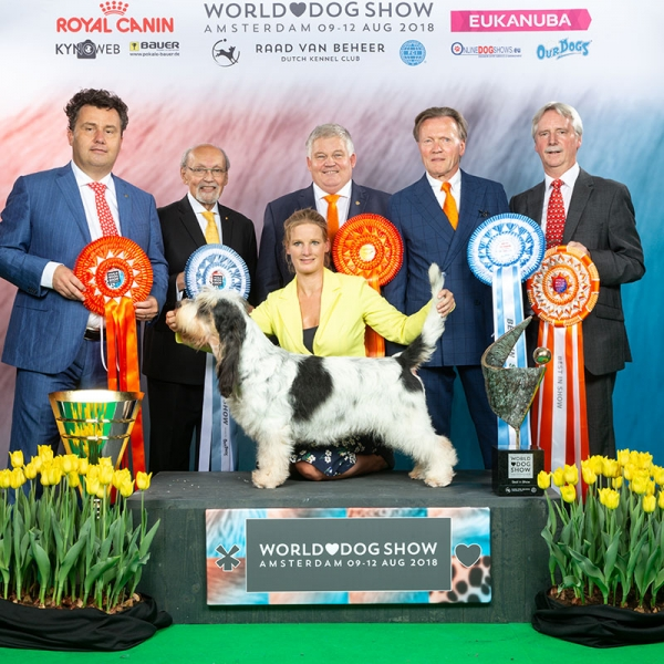 The Best in Show winner at the WORLD DOG SHOW in Amsterdam was the Grand Basset Griffon Vendeen, Frosty Snowman, owned and handled by Gwen Huikeshoven from Holland. Gwen is seen here receiving her many rosettes and superb trophies from Best in Show judge Rony Doedijns, (left) seen with the presentation party from left to right:  Rafael de Santiago, President of the FCI, Gerard Jipping President of the world show, Jack Alberts President of the Dutch Kennel Club and Vince Hogan of OUR DOGS, the International Media Partner of the show.