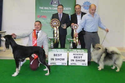 Best in Show at the April Malta CS Show was the Saluki, Ch Rom Ch Proenzaschouler Del Borghino. Reserve BIS was the Keeshond, Gatt's Ch Samkees Arrow To The Heart. BIS Judge was Jackie Stubbs.