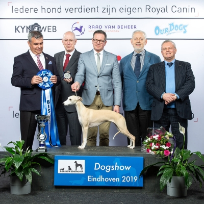 Best in Show at Eindhoven 2019 was the Whippet, Creme Anglaise's Eat My Dust, owned by J. W. Akerboom-van der Schaaf and K. van der Schaaf-Akerboom. Group Judge was Mr Koppens (NL) and BIS Judge was Mr Schogol (GE).