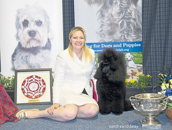 Best in Show at Scottish Kennel Club judged by Mrs Sue Hewart-Chambers went to Melanie Harwood's Miniature Poodle, Ch Minarets Best Kept Secret