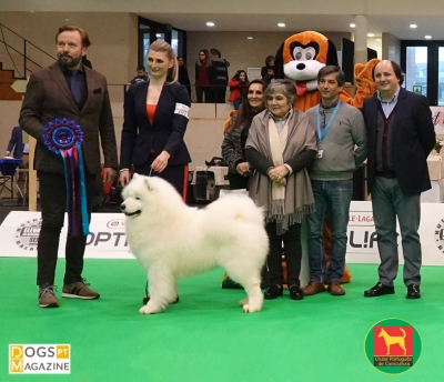 13th Fafe National Dog Show