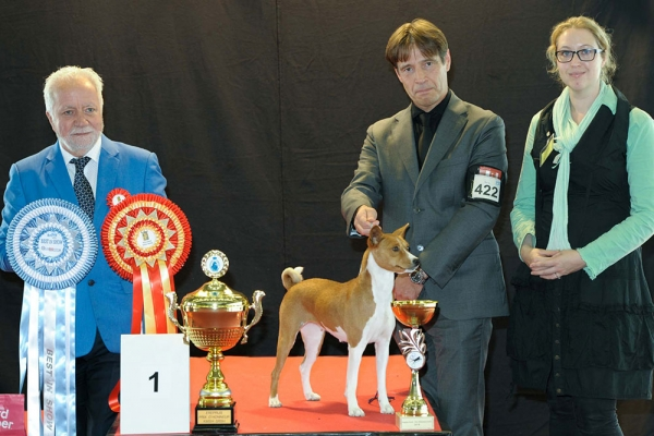 The La Louviere 2019 Best in Show winner was the Basenji, Faraoland On A Bed Of Roses, owned by Alain Alaerts from Belgium. Best in Show judge was Jean Jacque Dupas (France).