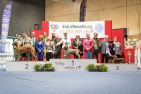 Best of Saturday was won by the Lagotto Romagnolo  Solipse Fantastico O. Muti owned by Kadnarova Jana