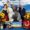 BIS was the Old English Sheepdog is owned by Joszef Koroknai, bred by Istvan Szelmar and was handled by Zsolt Hanò. Best in show judge from the Ukraine was Zoya Oleynikova.