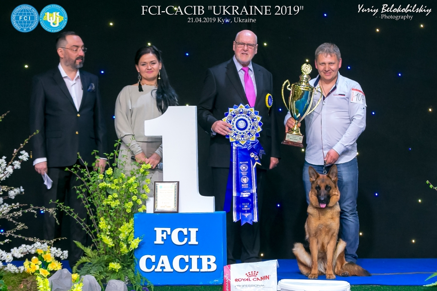 Best in Show was judged by Mr. KARL P. REISINGER (Austria) who gave first place to the German Shepherd Dog,