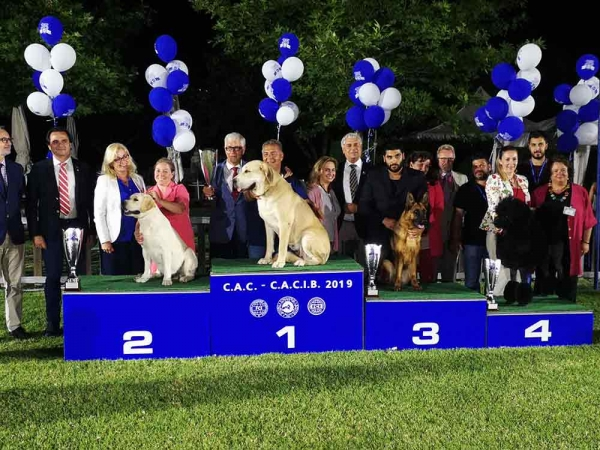 Best In Show at the International Show of the Greek KC, on 30th of June, under judge Mr. Knut-Sigurd Wilberg from Norway, was the Central Asian Dog, ALABAI SOUNIO CHANEL , owned by Thanasis Papathanasis & Natasa Stylianou,  2nd the Labrador Retriever,  BRAVO MESSI, owned by N. Shatrukova, 3rd  the German Shepherd Dog, VALDERA CLEVER CANIN, owned by George Likousis & Alexandros Ioannidis , 4th the Standard Poodle, BLACK MOON RISING DANGER HIGH VOLTAGE, owned by Lina Kostaki & Fotiny Gika.