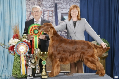Best in Show at Wieze was the Irish Red Setter, Harko Dekellefleur, owned by Ilse Vermeiren from Belgium. BIS judge was Roger Vanhoenacker (Belgium).
