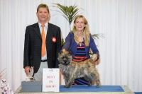 Best in Show at the Luxembourg autumn show was the Cairn Terrier, Limecastles Gangster Of Love, owned by Alice Zanchi from Switzerland. BIS Judge was Paul Jentgen (Luxembourg).