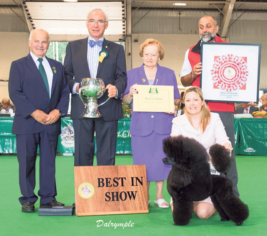 Relaxing after being awarded Best in Show at Paignton Championship Show is the Miniature Poodle, Ch Minarets Best Kept Secret with owner/handler Melanie Harwood.