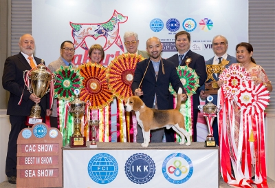 All Breed Best In Show - FCI Apac Show - Under Judge: Mr Ramon Podesta (Chile) | BIS 1: Chaucer Scandalous Byte (Beagle)