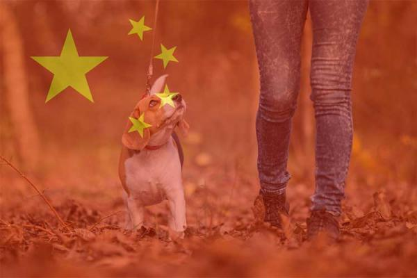 China government confirms dogs as companions
