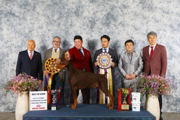 2019 Korea Premier Dog Show