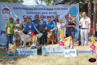 Best in Show at Aleksinac was the Boxer, Ch Titanic Ursatoboks owned by Joksic Micaå