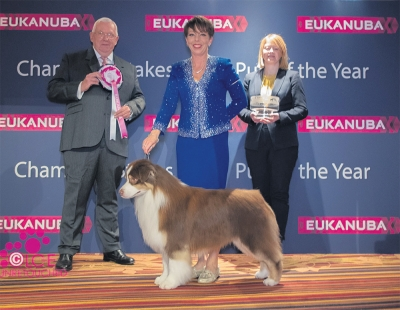The winner of the Champion Stakes Final, judged by Dr Ron James was the Australian Shepherd, AKC ASCA UK Ch Wyndstar Magic Marker (Imp USA) owned by Kerry Kirtley (breeder), Dori Erdesz, John Shaw and Melanie Raymond (handling).