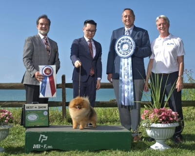 Best in Show at the Regatta Classic was the Standard Poodle judged by Franki Leung.