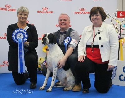 Best in Show at the Combined Canine Club International Easter Classic Championship show at the National Show Centre in Dublin was Stewart and Heather Cummings and Kelly Lawless' Pointer male, the big winning Sh Ch/GB Sh Ch/Int Sh Ch  Kanix Kroner at Sevenhills who was handled by Stewart. Sylvie Desserne from France was the Best in Show judge and Mary Davidson represented sponsors Royal Canin in the photo presentations.