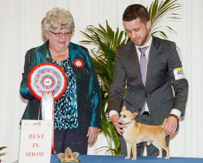 Best in Show at the Luxembourg springs how was the winner of Group 9, the Smooth Chihuahua, Dartan The Valiant Aladar, owned by Sandra Ludmir from Spain. BIS Judge was Mrs Liliane De Ridder-Onghena (Belgium).
