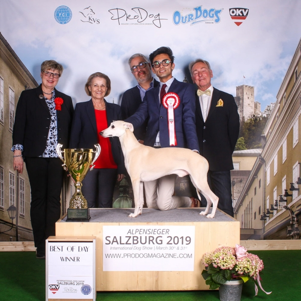 Overall winner on Saturday at the Alpensiger - Salzburg International Dog Show 2019 was the Whippet DANDY II OF GENTLE MIND owned by Joachim Bartusch & Werner Demmerling, DE and was Winner of Group 10 judged by Sajia Luutilainen (Finland)