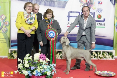 "Best in Show Judge: Carla Molinari (PT) 1º ""Silhouettes Fast Enough"", Weimaraner, João Soares"