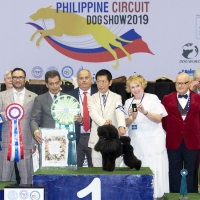 10.01.2019 - 179th FCI All-Breed Championship Dog Show  BIS was the Minature Poodle, CH Hearty K. Samurai Go FCI. 2nd BIS was the Welsh Corgi (Pembroke), CH Realline Final Boss. 3rd BIS was the Beagle, CH Fanta's Brand Makes People Talk.  Judge: Mr. Ricardo Saldaña (Mexico).