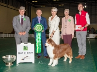 Best in Show was the  Australian Shepherd Akc Ch / Asca Ch Wyndstar Magic Marker (Mark), owned by Melanie Raymond (handler), Kerry Kirtley & Dori Erdesz, pictured with Chairman John H Orbell, best in show judge Ernie Paterson, Secretary Pat Dufty & Ricky Furnell (Royal Canin).