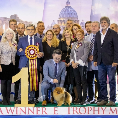 SUPREME BEST IN SHOW @ Roma Winner 2019 - 2 x CACIB Club Show ENCI FCI