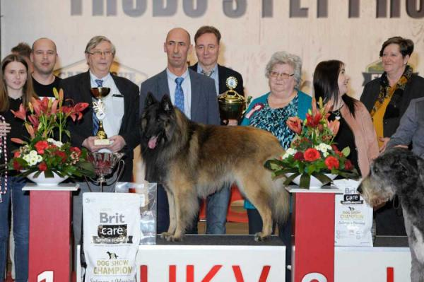 Ambiorix Trofee Dog Show 2020 Belgium Best In Show Was The Belgian Shepherd Dog Tervuren Grimmendans Qarasco Spruyt-vermeire