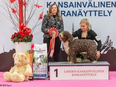 Best in Show at the Lahti spring show was the Spanish Water Dog, Aquacrest Magic Mike, owned by Päivi Uurtola-Kahri & Noora Haapane. BIS Judge was Leni Finne.