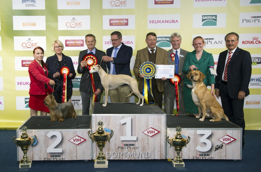 Best in Show at the Dortmund International Show judged by Hans van den Berg, was the Whippet, Creme Anglaise's Pantomime owned by Akerboom and Hansen. Reserve spot went to the Australian Silky Terrier, Pet Pursuit Bay Falcon (Timonen/Virtanen) and Third, the Portuguese Perdigueiro, 'Viccor' owned by Lidy Put and handled by Dutch handler Priscilla van Oosten. The presentation party included, from left to right, Christa Bremer (VDH Vice President) Peter Friedrich (VDH President) Vince Hogan (OUR DOGS International Media Partner) and Wolfgang Henke (Vice President of the VDH).