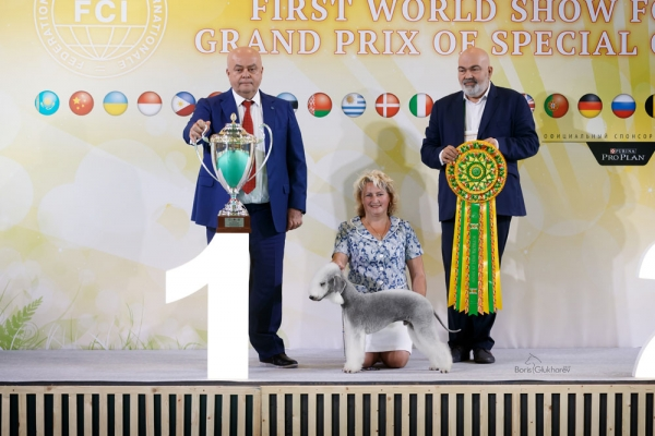 The Mazover weekend Supreme Best In Show Title was claimed by the Bedlington Terrier, Champion L'End Show Mette Surprise At Glare,  owned by Elena Pykhtar.