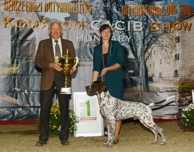 The Saturday BIS judged by Robin Newhouse (UK), the BIS was was the German Shorthaired Pointer Edelhof Venandi Vikig, owned by  Dydak Marlena, Alicija Pazdzierkiewicz (PL)