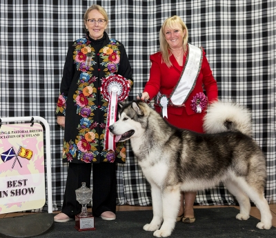 Best in Show at the Working & Pastoral Breeds Association of Scotland was the Alaskan Malamute Ch Chayo Cause Celebre owned by Sue Ellis and pictured with the judge Meg Purnell-Carpenter.