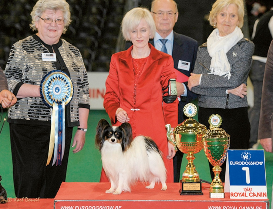 Papillon Planet Waves Forever Young Daydream Believers, Kathleen Roosens breeder and owner.