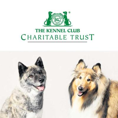Tyler the Rough Collie and Kiwi the Akita, two of the stars of the 2020 Kennel Club Charitable Trust Breed Rescue Calendar, which is just one of the ways in which the Trust raises funds to help to rescue dogs. Please give generously to the Our Dogs appeal in support of the Trust's emergency fund designed to provide assistance to rescue organisations affected by the current health crisis.