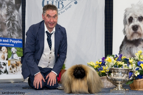 Best in Show at Scottish Kennel Club Championship Show judged by Moray Armstrong was Albert Easdon and Philip Martin's Pekingese, Ch Yakee The Aristocrat.