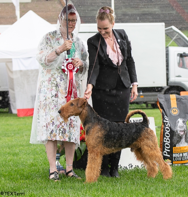 Best in Show at Rovaniemi was the Airedale Terrier, Int Ch Katherina's Land Wish Me Luck, owned by Jukka Kemppainen. Handler was Pia von Koch. BIS Judge was Paula Heikkinen-Lehkonen.